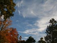autumn-glory