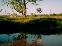 pond-reflection