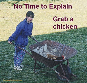 Grab a Chicken