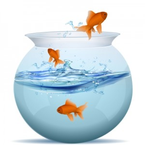 Image of Goldlfish Jumping from a fishbowl
